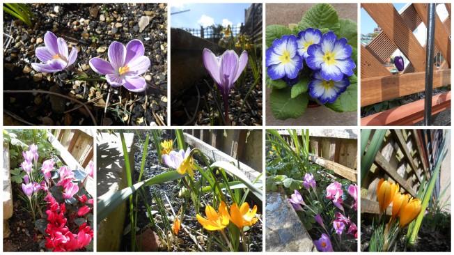 Spring flowers 2